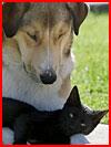 Лучшие котоматрицы  (гей фото, блюсик 9275)