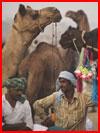 Верблюжья ярмарка  (гей фото, блюсик 9903)